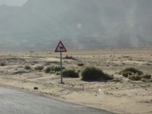Yield to Camels!