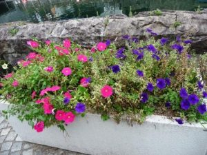 flowers-1-otaru-canal-compressed